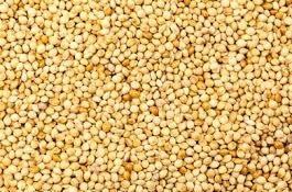 Guinea Corn