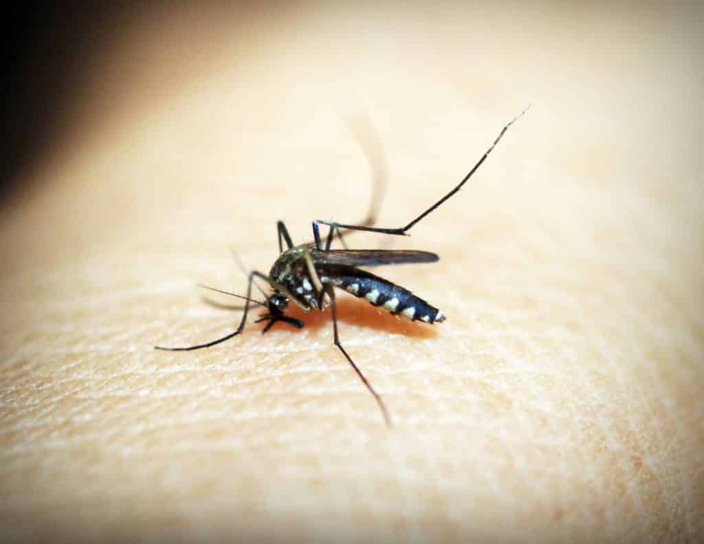Malaria is caused by a parasite carried by the female anopheles mosquito